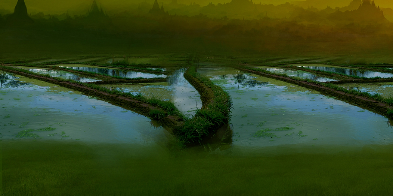 Burmese rice fields 1 .    137 cm x 102 cm  .       From  300 € .