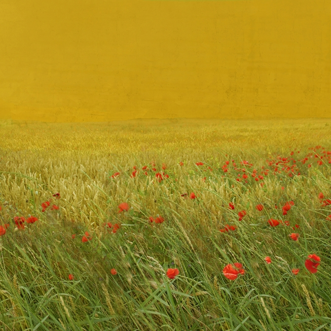 Red poppy fields 3.      150 cm x 100 cm.     A partir de 300 €  .
