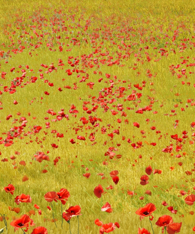 Red poppy fields 5.      93 cm x 204 cm .         From 420 € .